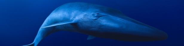 Les plus gros animaux de la planète 1