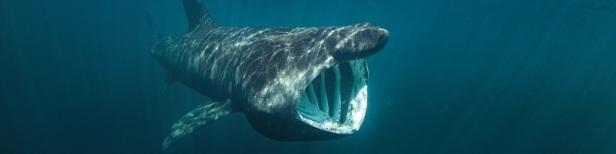 Les plus gros animaux de la planète 9