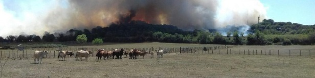 Incendie Gard 1