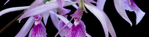 Plante d'intérieur parfumée 2