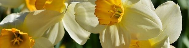 Plante d'intérieur parfumée 5