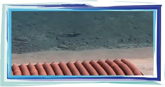 Confinement requins