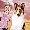 Jon Provost In 'Lassie'
