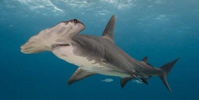 Requin 04