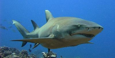 Requin 08